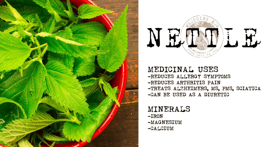 What to do with Stinging Nettles: Herb Spotlight