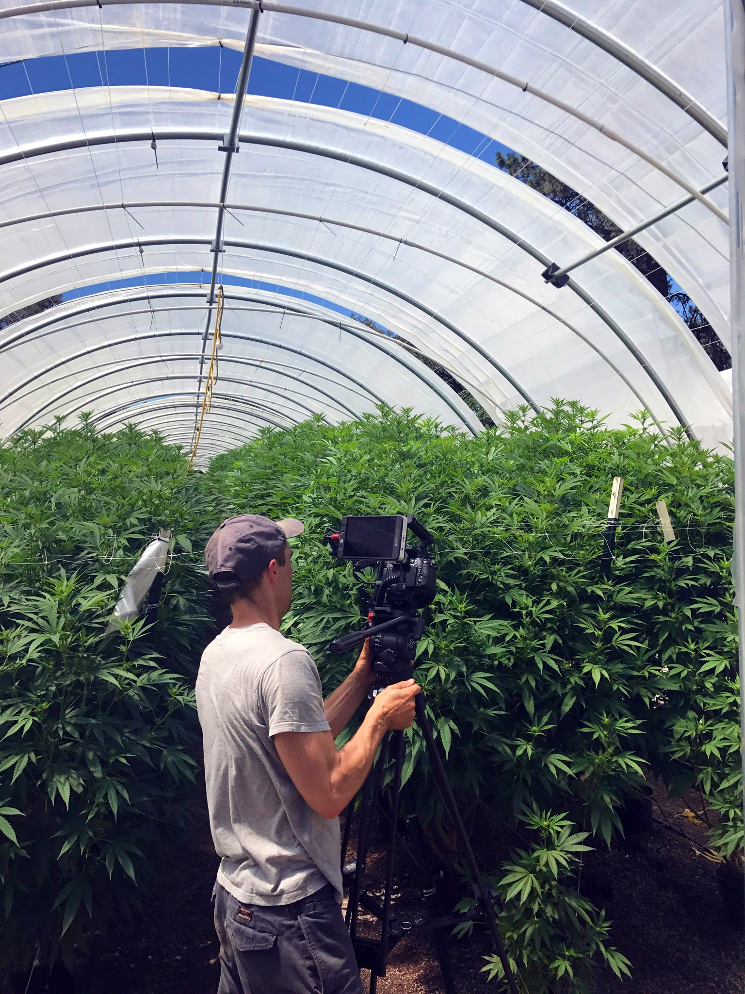 The 4 Corners of the Cannabis Industry — Medicine Box Monday