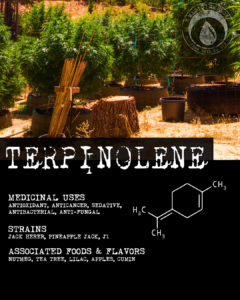 Terpinolene - Terpene Tuesday from Medicine Box