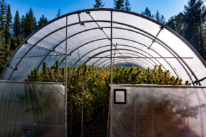 nevada county craft cannabis