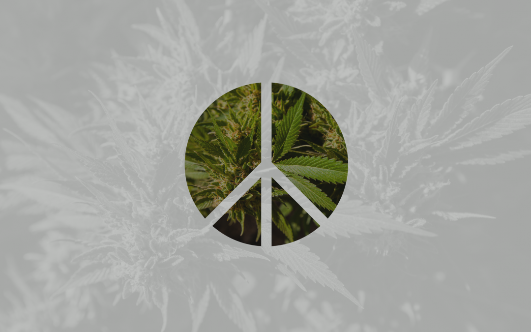 Peace Talks: The Role of Conflict and Conflict Resolution in Cannabis