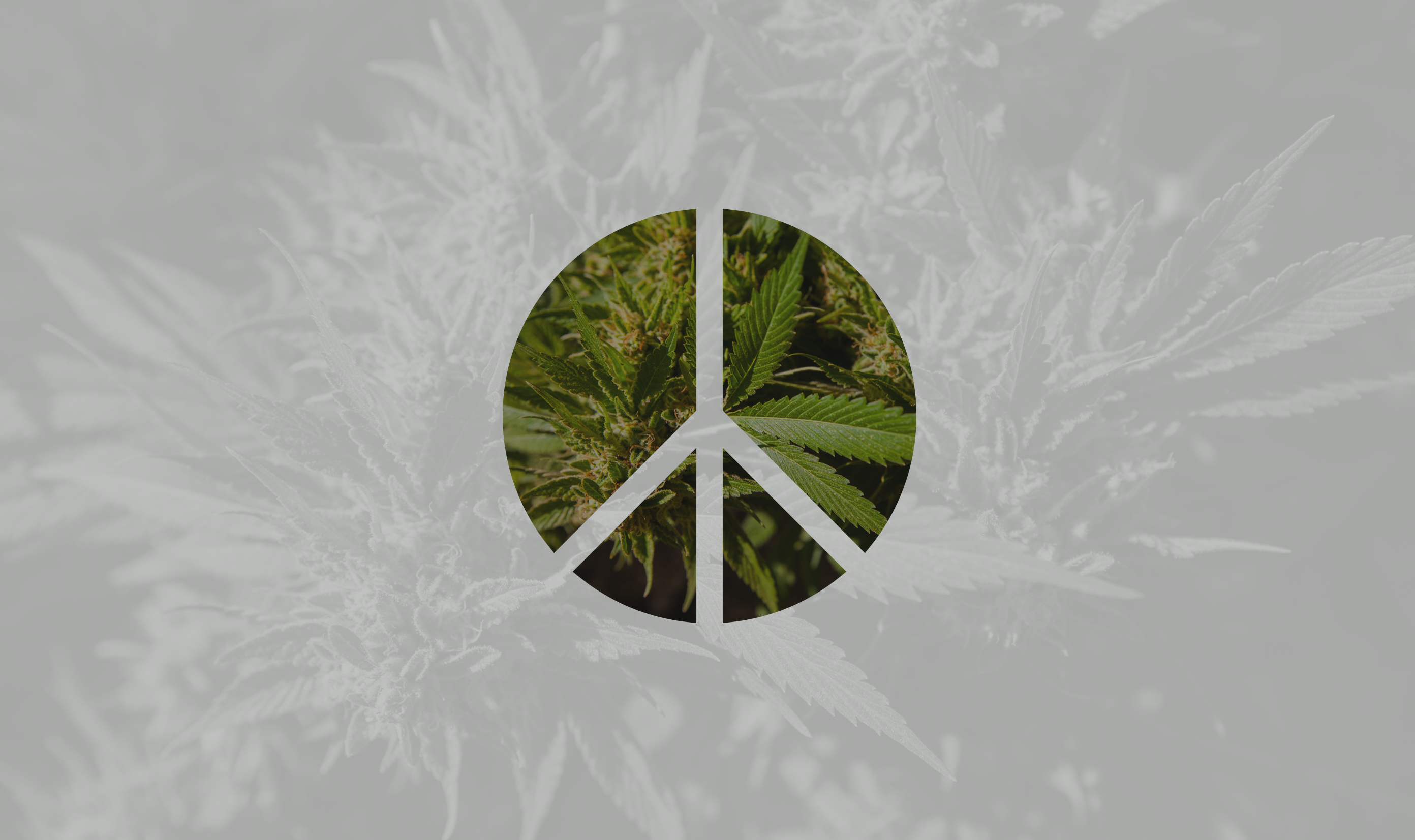 cannabis conflict resolution