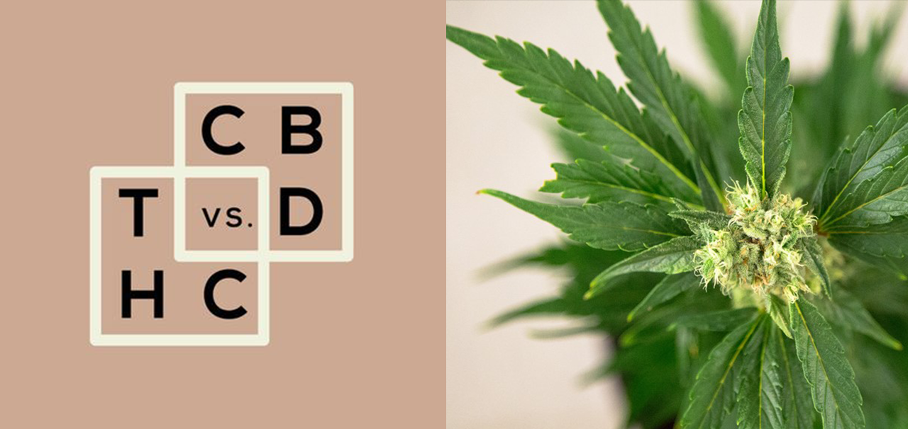cbd vs. thc vs. whole plant