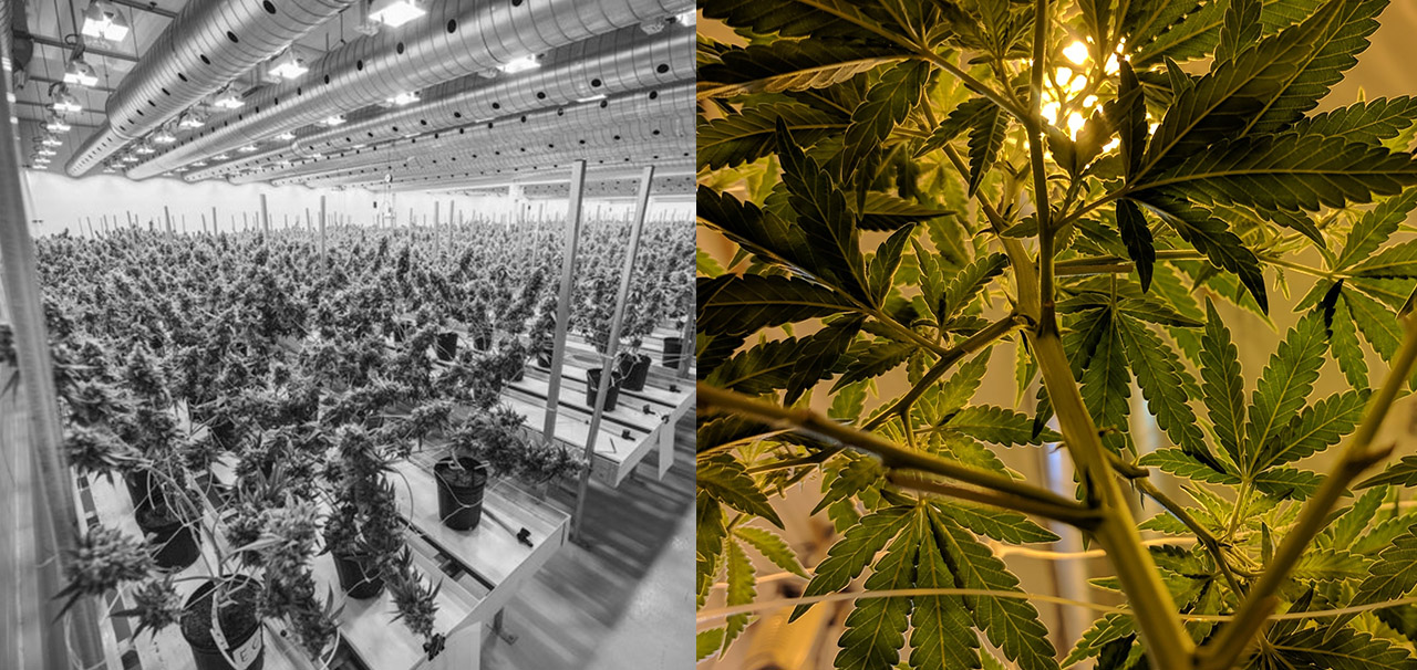 factory farming and indoor cultivation