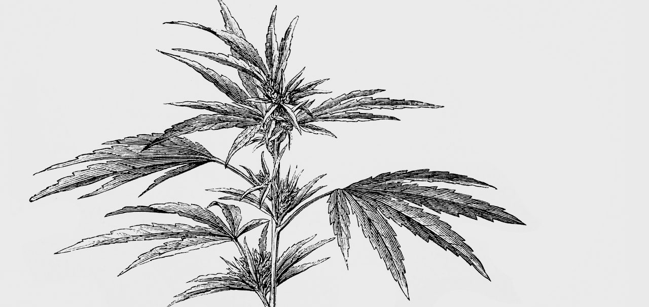 holistic approach of the cannabis industry