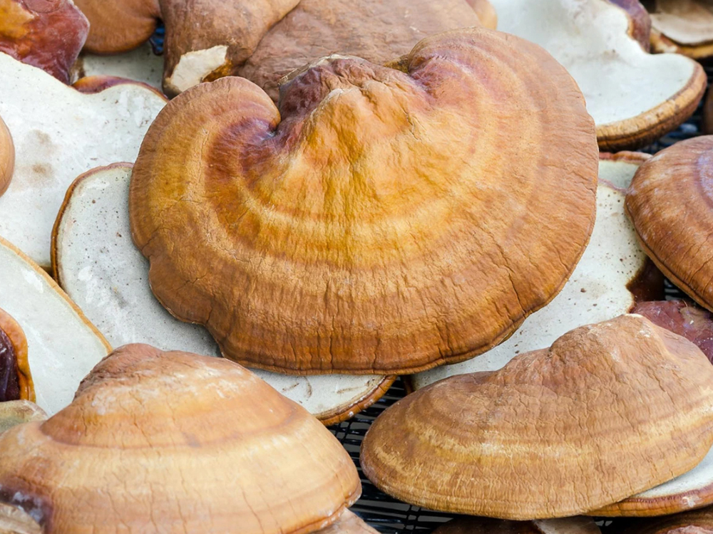 reishi - The mushrooms of Medicine Box