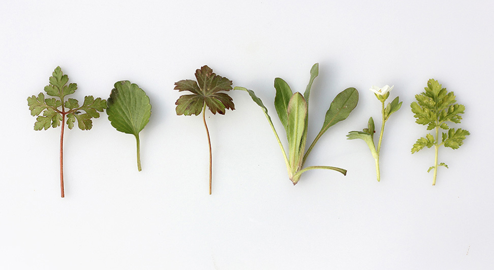wildcrafted different types of herbs
