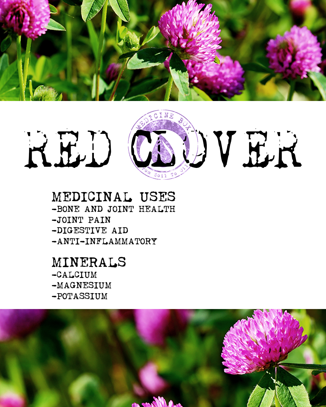 red clover herb spotlight from medicine box