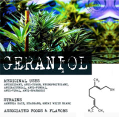 geraniol, geraniol medical uses