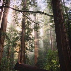 forest solitude, journey to mindfulness
