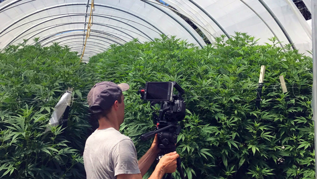 the 4 corners of the cannabis industry