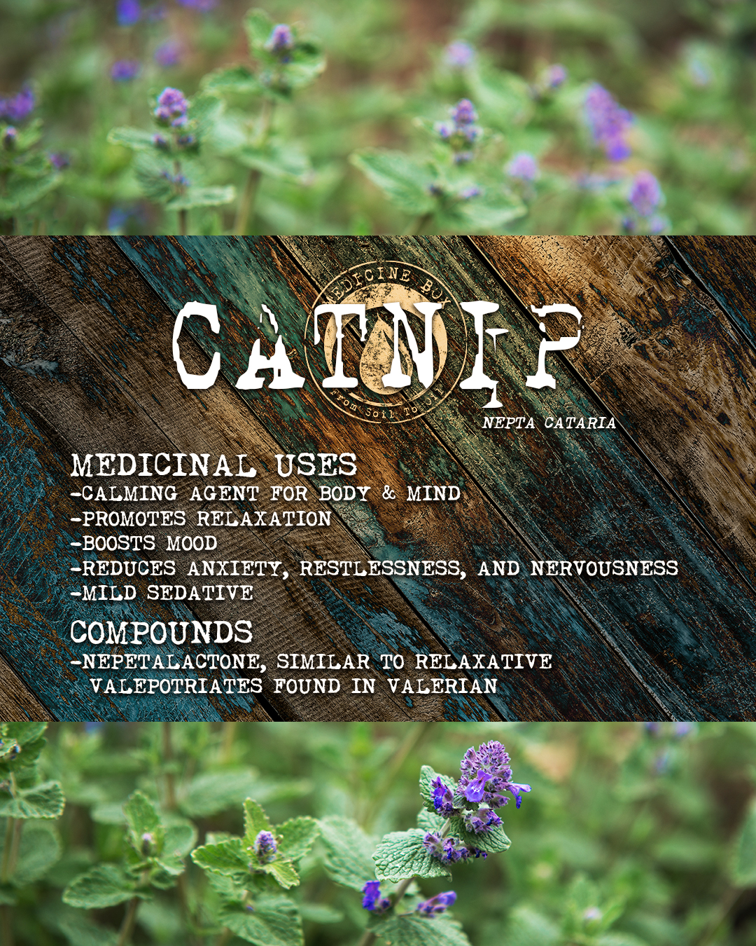 Equanimity cannabis tincture ingredient: catnip
