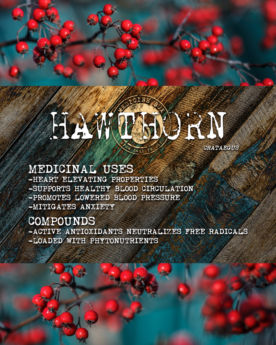 cannabis tincture ingredient: hawthorn