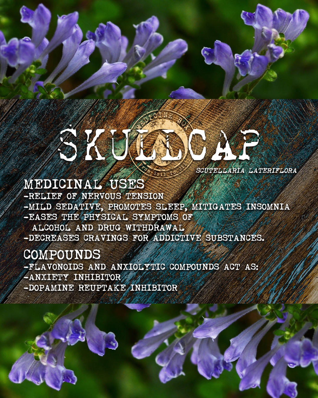 Equanimity ingredient: Blue Skullcap