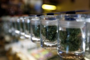 Australia intends to produce a variety of products, not just the marijuana plans