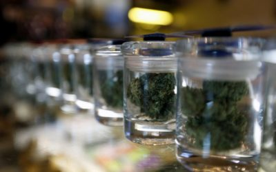 Why Australia wants to be the number 1 exporter of cannabis